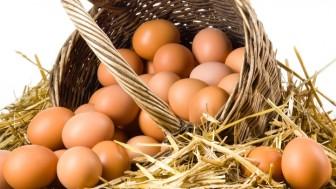 Köy Yumurtası Nasıl Anlaşılır?