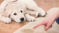 Evdeki Köpek Kokusu Nasıl Giderilir?