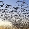 Kuşların Balkona Gelmemesi İçin Ne Yapılır?