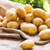 Patatesin Çürümesi Nasıl Engellenir?