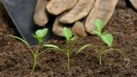 Organik Gübre Nasıl Yapılır?