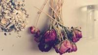 Kurumuş Gülleri Nasıl Değerlendirebilirim?