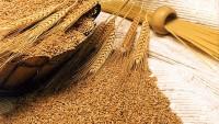 Islatmadan Buğday Pişirmek
