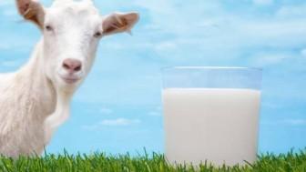 Keçi Sütü Kansızlık Yapar mı?