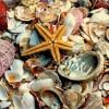 Deniz Kabuğu Nasıl Temizlenir?