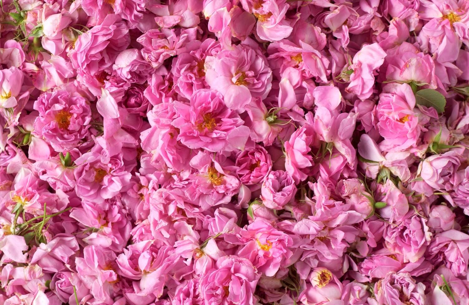 Gül Yaprağı Güzellik Faydaları ve Kullanım Alanları